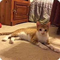 Adopt A Pet :: Grady - Smithfield, NC