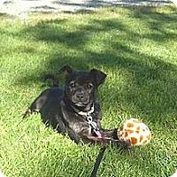 Adopt A Pet :: Emma - Gig Harbor, WA