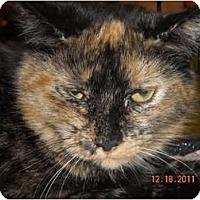 Adopt A Pet :: Cassie - Riverside, RI