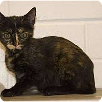 Adopt A Pet :: Brenda - New Port Richey, FL