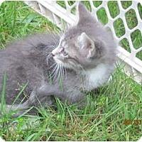 Adopt A Pet :: Jinx - Oxford, CT