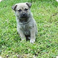 Adopt A Pet :: Lena - Chattanooga, TN
