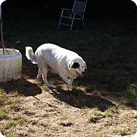 Adopt A Pet :: Cody - Gig Harbor, WA