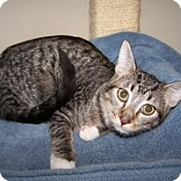 Adopt A Pet :: K-DelMar1-Eagle - Colorado Springs, CO