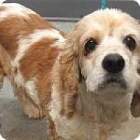 Adopt A Pet :: Myra - Alpharetta, GA