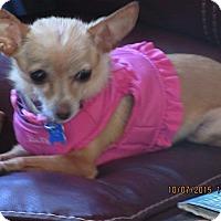 Adopt A Pet :: Posey - San Diego, CA