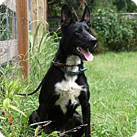 Adopt A Pet :: BLACK BUDDY - richmond, VA