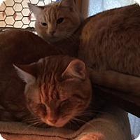 Adopt A Pet :: Peanut & Louey - N. Berwick, ME