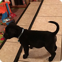 Adopt A Pet :: Zooma - Las Vegas, NV