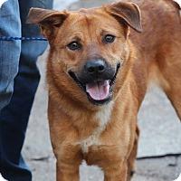Adopt A Pet :: Athena - Minneapolis, MN