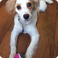 Adopt A Pet :: Milo - Santa Monica, CA