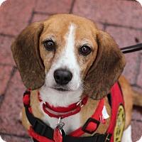 Adopt A Pet :: Sally (Has application) - Washington, DC