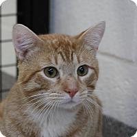 Adopt A Pet :: Jimi - Sarasota, FL