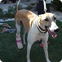 Adopt A Pet :: Alfie - Tucson, AZ