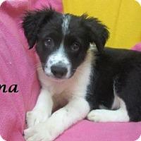 Adopt A Pet :: Carma - Bartonsville, PA