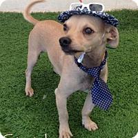 Adopt A Pet :: Stretch - San Diego, CA