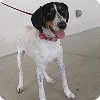 Adopt A Pet :: Colt - Bedford, TX