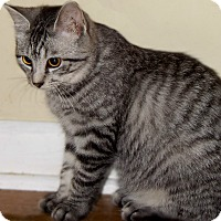 Adopt A Pet :: Sydney - McEwen, TN