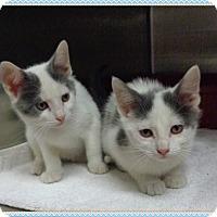 Adopt A Pet :: FRICK & FRACK - available 12/1 - Marietta, GA