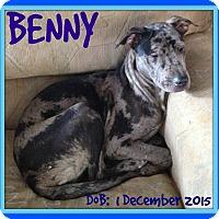 Adopt A Pet :: BENNY - New Brunswick, NB