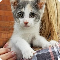 Adopt A Pet :: Pumpkin - SAN PEDRO, CA