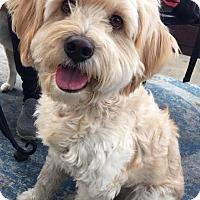 Adopt A Pet :: Precious - Palo Alto, CA
