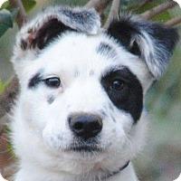 Adopt A Pet :: Kelly - Cedartown, GA