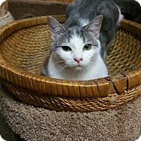 Adopt A Pet :: Amidala - Morganton, NC