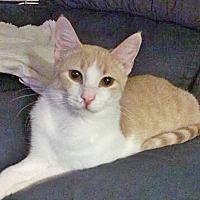 Adopt A Pet :: Finn - Highland, IN