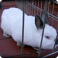 Adopt A Pet :: Dude - Williston, FL