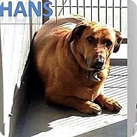Adopt A Pet :: HANS - Portland, OR