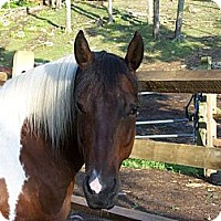 Adopt A Pet :: Roxy - Washington, CT