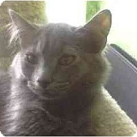 Adopt A Pet :: Smokey - Greenville, SC