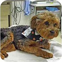 Adopt A Pet :: Bogie - Columbus, OH