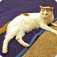 Adopt A Pet :: Vega - Davis, CA
