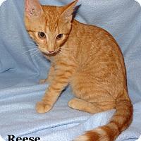 Adopt A Pet :: Reese - Bentonville, AR