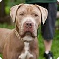 Adopt A Pet :: Stryker - Park Ridge, NJ