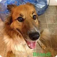 Adopt A Pet :: Brandi - Adopted - Nov 2015 - Huntsville, ON