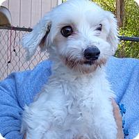 Adopt A Pet :: Abby - Crump, TN