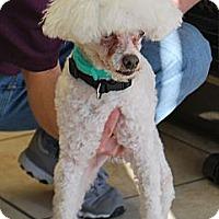 Adopt A Pet :: Murray (Owner Surrender) - Philadelphia, PA