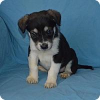 Adopt A Pet :: Blue Blood: Danny - Corona, CA