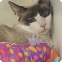 Adopt A Pet :: Aria - Suwanee, GA