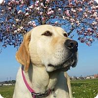 Adopt A Pet :: Honey - Warrington, PA