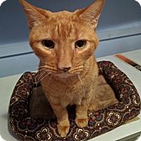 Adopt A Pet :: CINNAMON! - Philadelphia, PA