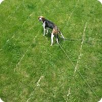 Adopt A Pet :: Saratoga - Lakeville, MN
