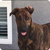 Adopt A Pet :: Remy - Sunnyvale, CA