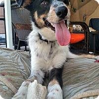 Adopt A Pet :: Garrett - Bradenton, FL