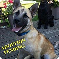 Adopt A Pet :: FREDDY - Winnipeg, MB