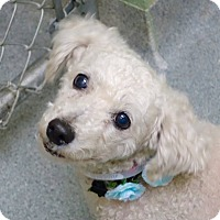 Adopt A Pet :: Leidy - Long Beach, NY