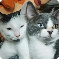 Adopt A Pet :: Daphne - St. James City, FL